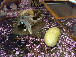 The wild haggis and how it is prepared as food (Photo credit: Wikipedia/Emoscopes)
