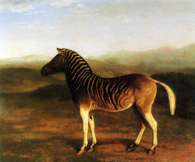 Quagga painted by Jacques-Laurent Agasse (1767 - 1849)