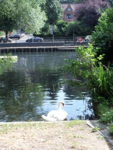 We lunched by the Wensum, which is popular with boaters as well as swans