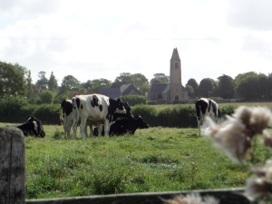 See: cows. And Gratot's church in the background. The ruined castle is barely visible to its left.